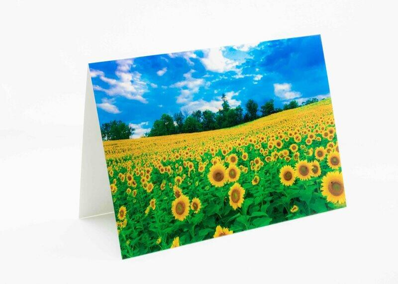 Sunflower Fields Greeting Card
