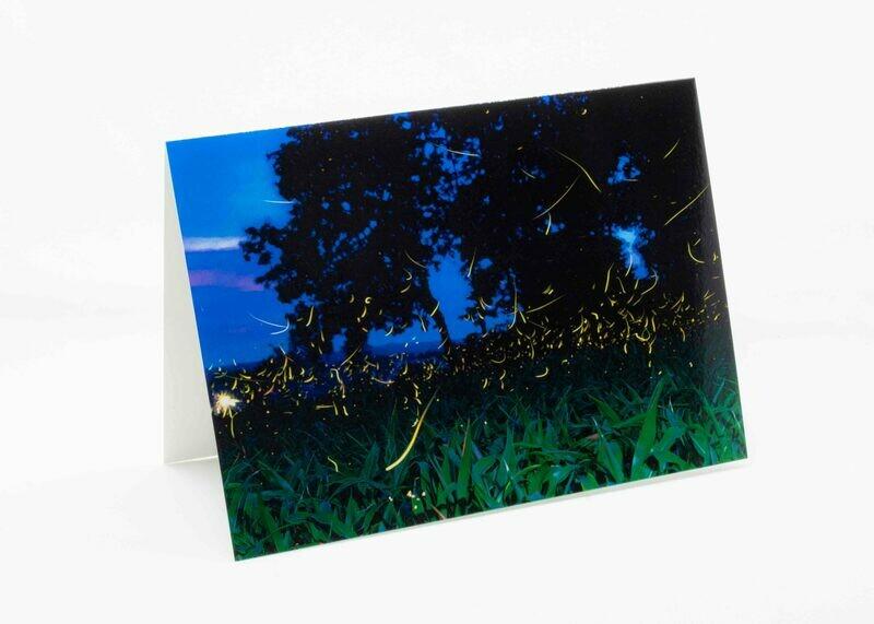 Summer Fireflies Greeting Card