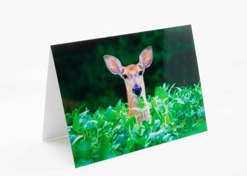 Soy Deer Greeting Card