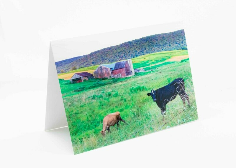 Barn Cows Greeting Card