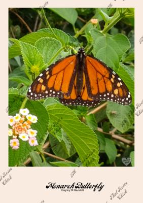 """""""Monarch Butterfly"""" ~ Digital Print"""