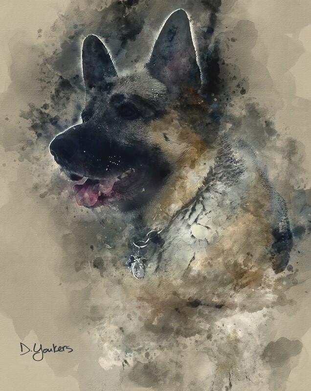 Commission a Pet Portrait