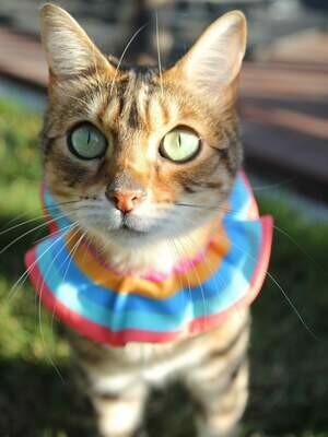 Cat Scrunchies