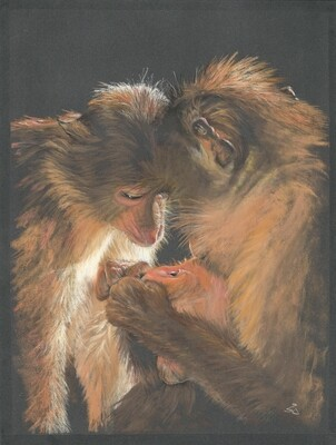'Animal Love'