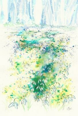 'Snowdrops in woodland'