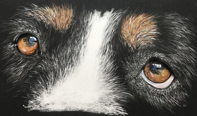 'Dog Eyed'