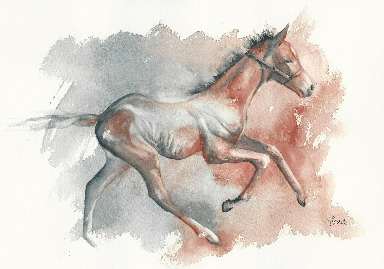 'Foal Running'