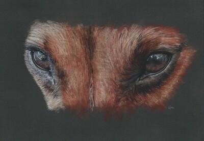 'Dog Eyed - Jack Russell'
