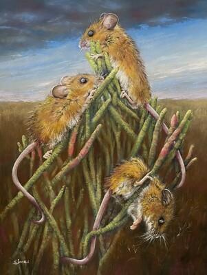 'Salt Marsh Harvest mice'