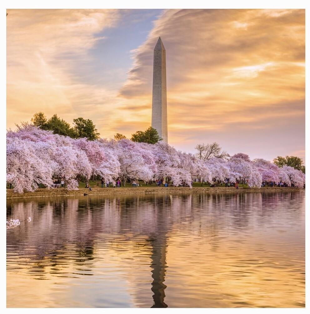 Cherry Blossom Puzzle