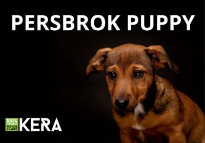 Kera 100% Natural: Persbrok Puppy