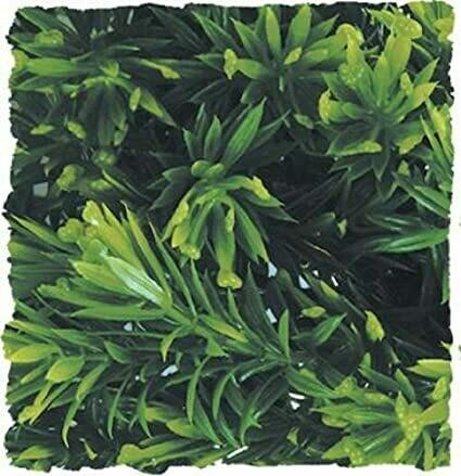 ZooMed - Naturalistic Flora - Borneo Star