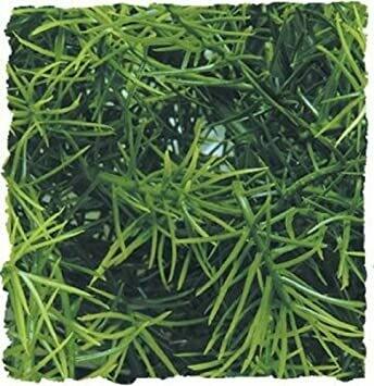 ZooMed - Naturalistic Flora - Cashuarina