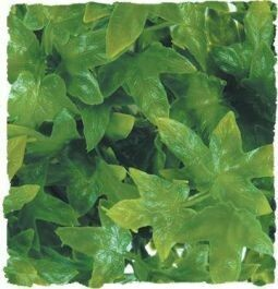 ZooMed - Naturalistic Flora - Congo Ivy