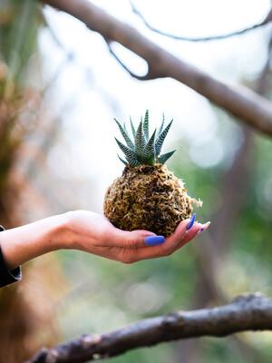 Kaktus ili sukulent