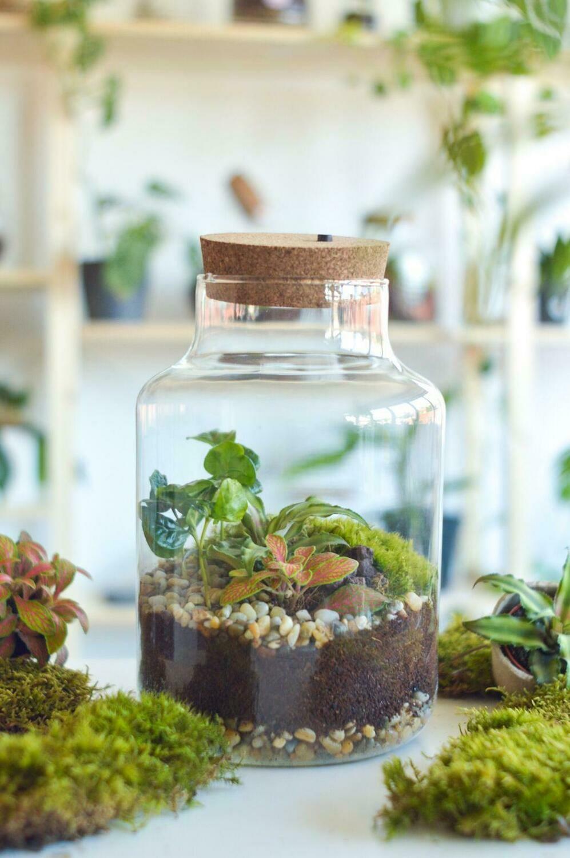 Održavanje biljnog terarija: zatvoreni eko sustav