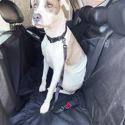 Tubular Dog Seat Tether™