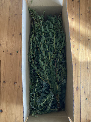 Winter Eucalyptus Box