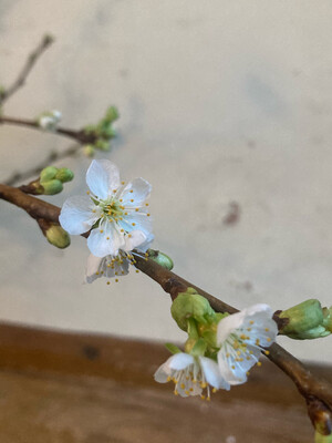 The Cherry Blossom Box