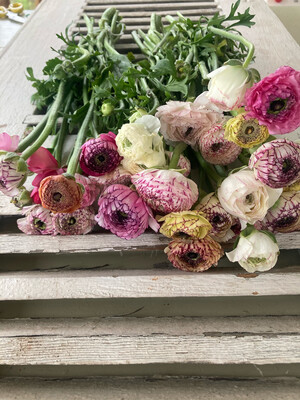 The Ranunculus Striped Box
