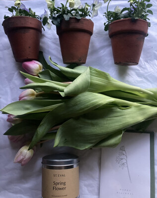 The Mother's Day Tulip & Miniature Terracotta