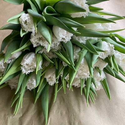 The White Fringed Tulip Box