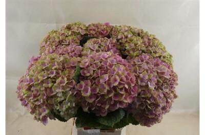 The Pink Hydrangea Box