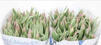 The Pink Tulip Box