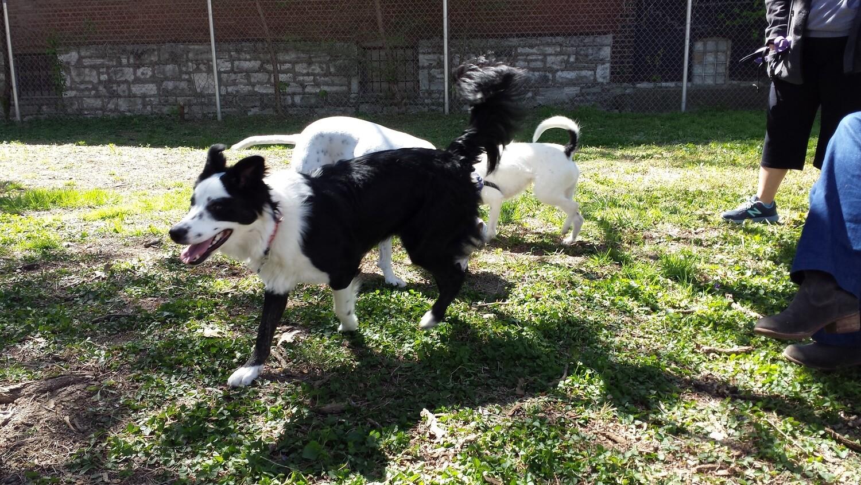Dog Park Membership - One Dog