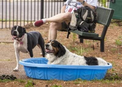 Cherokee Dog Park
