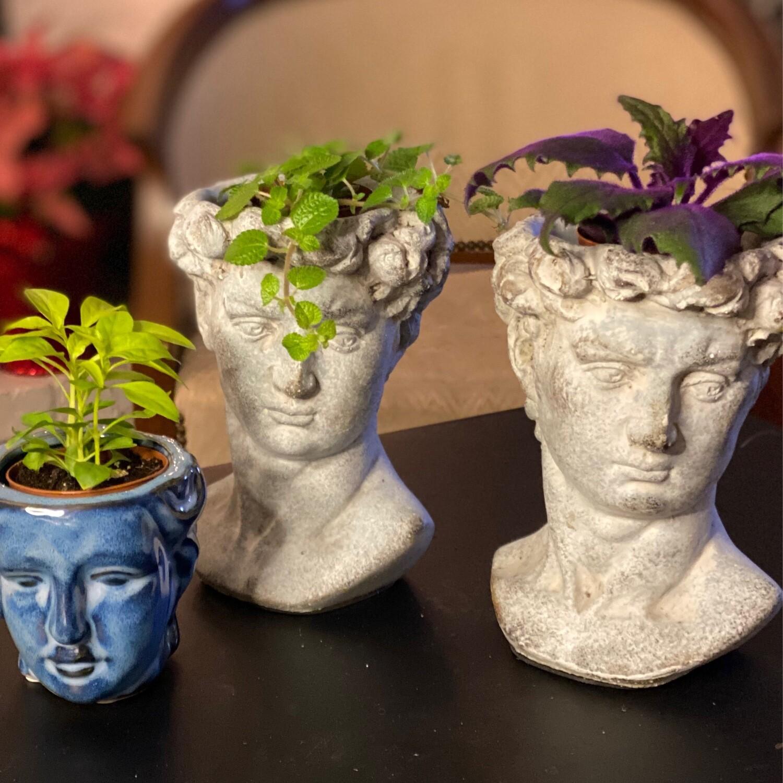 Planter - head