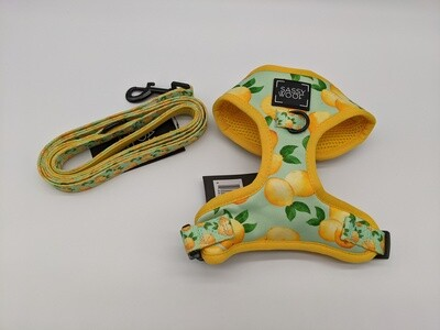 Main Squeeze harness and leash combo