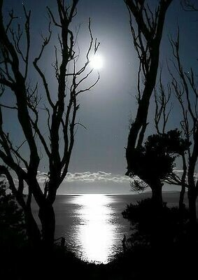 Moonlight On The Bayou - 12