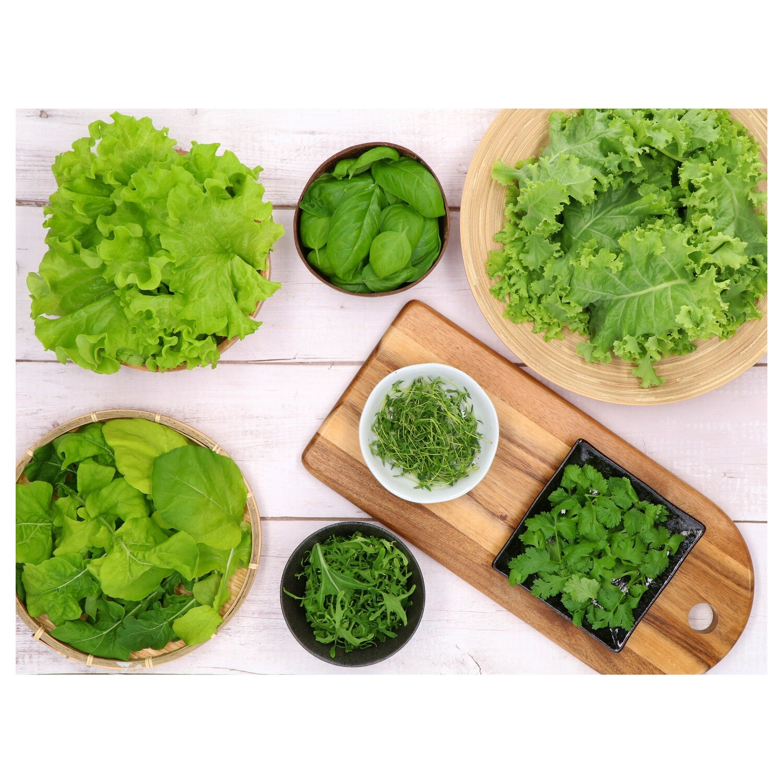 GreenBugs 10 Varieties Salad Mix