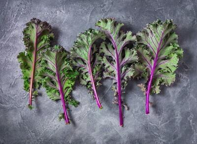 USA Breed Purple Kale