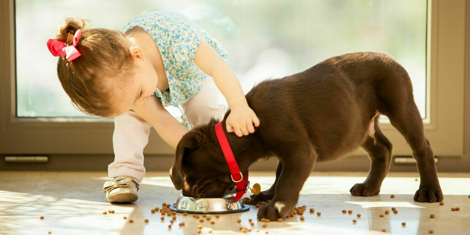 Dog Breeds Suitable For The Kids