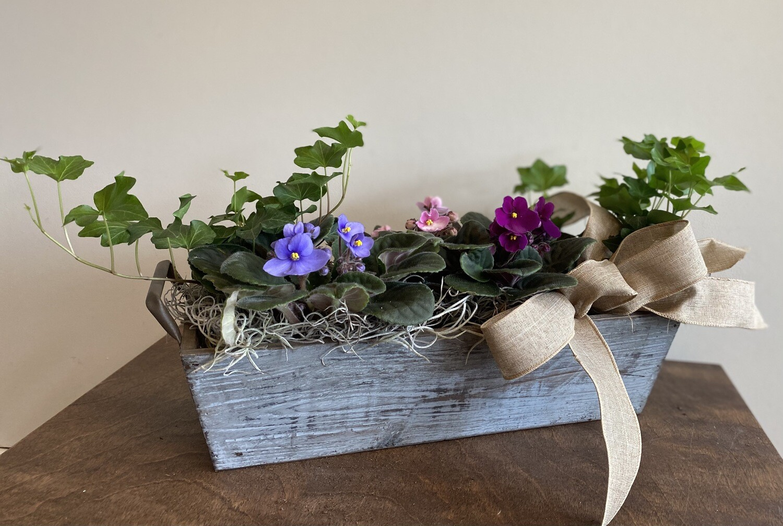 African Violet Window Box