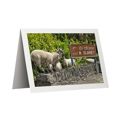 Photo Card - Sheep at the Slaney
