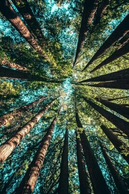 Balance in Nature Retreat