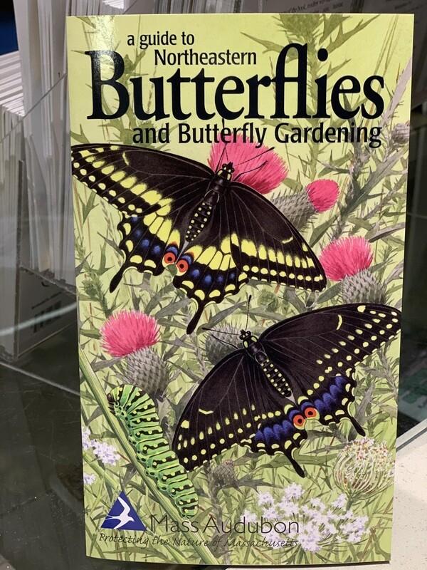 Pamphlet Butterflies