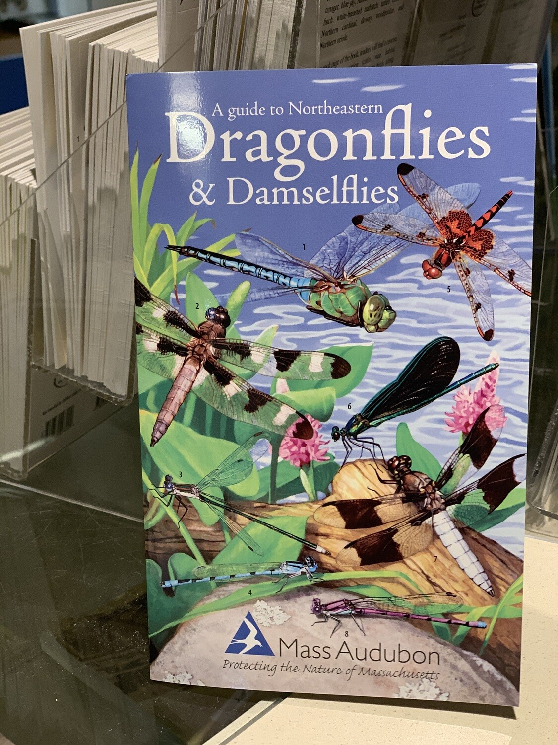 Pamphlet Dragonflies