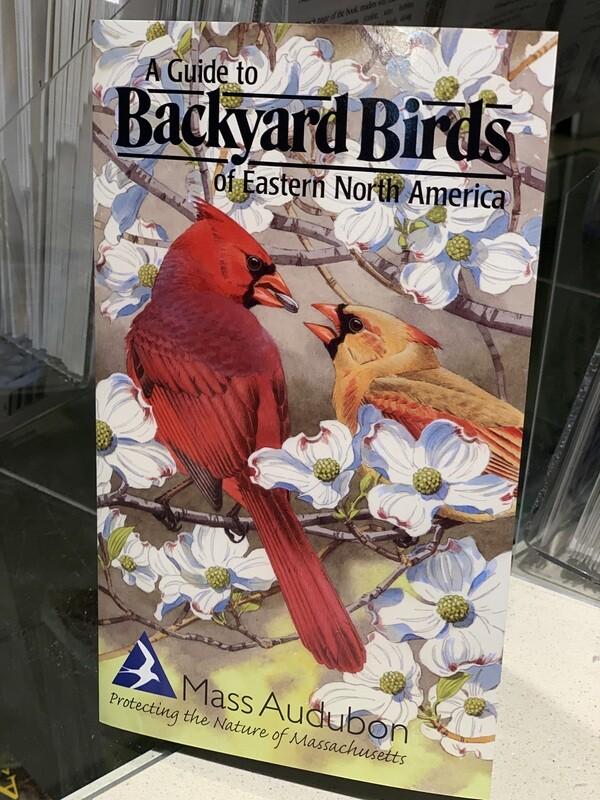 Pamphlet Backyard Birds