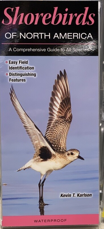 Field Guides Shorebirds