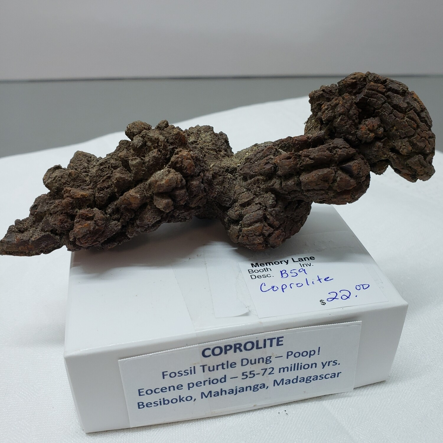 Fossil turtle dung - poop