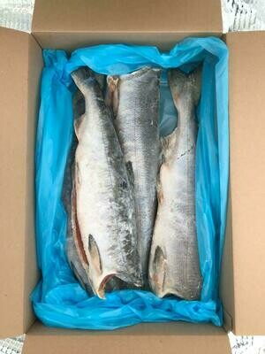 Savvaļas ketlasis (6.5 KG)