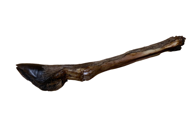 Stort hjorteben m pels ca 30-40 cm
