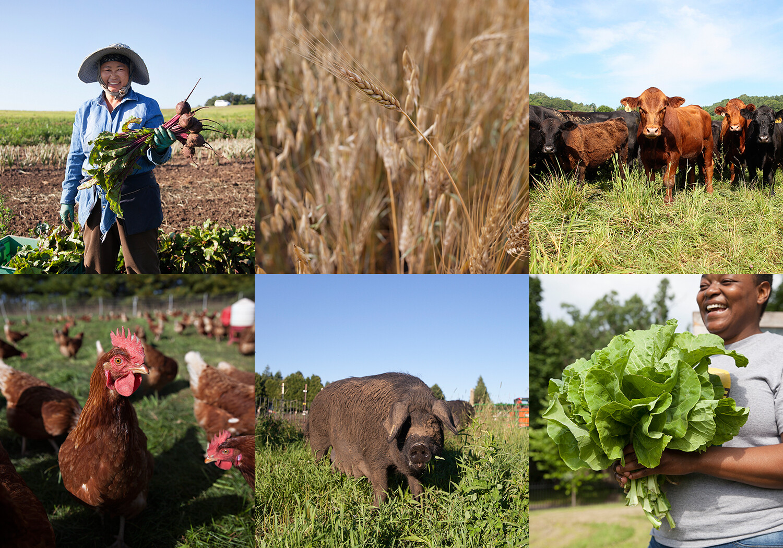 Donate to Minnesota Farmers Union Foundation