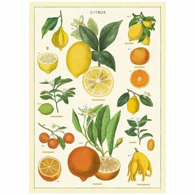 Citrus Fruits Poster