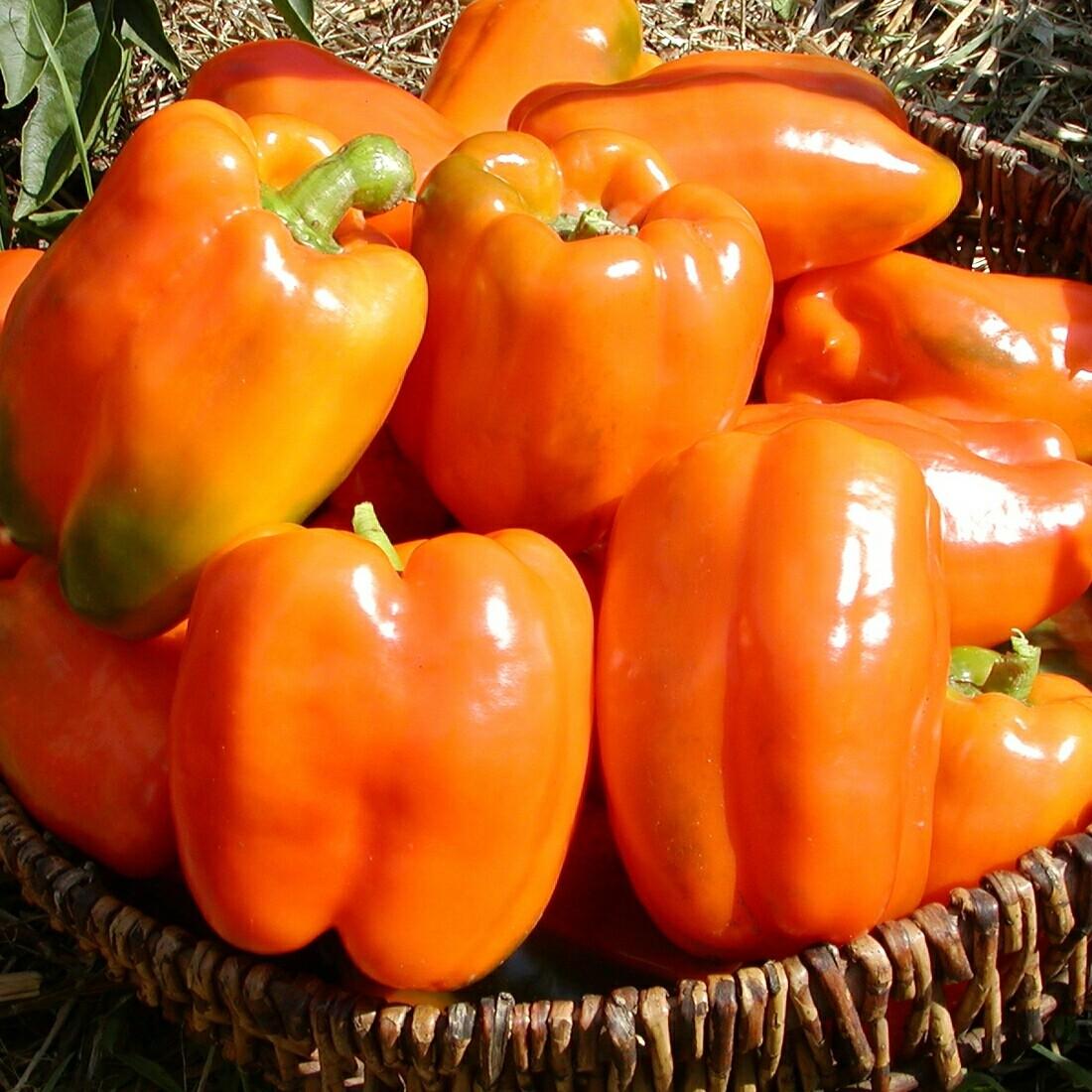 Poivrons oranges au kg