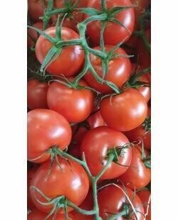 Tomate grappe Française